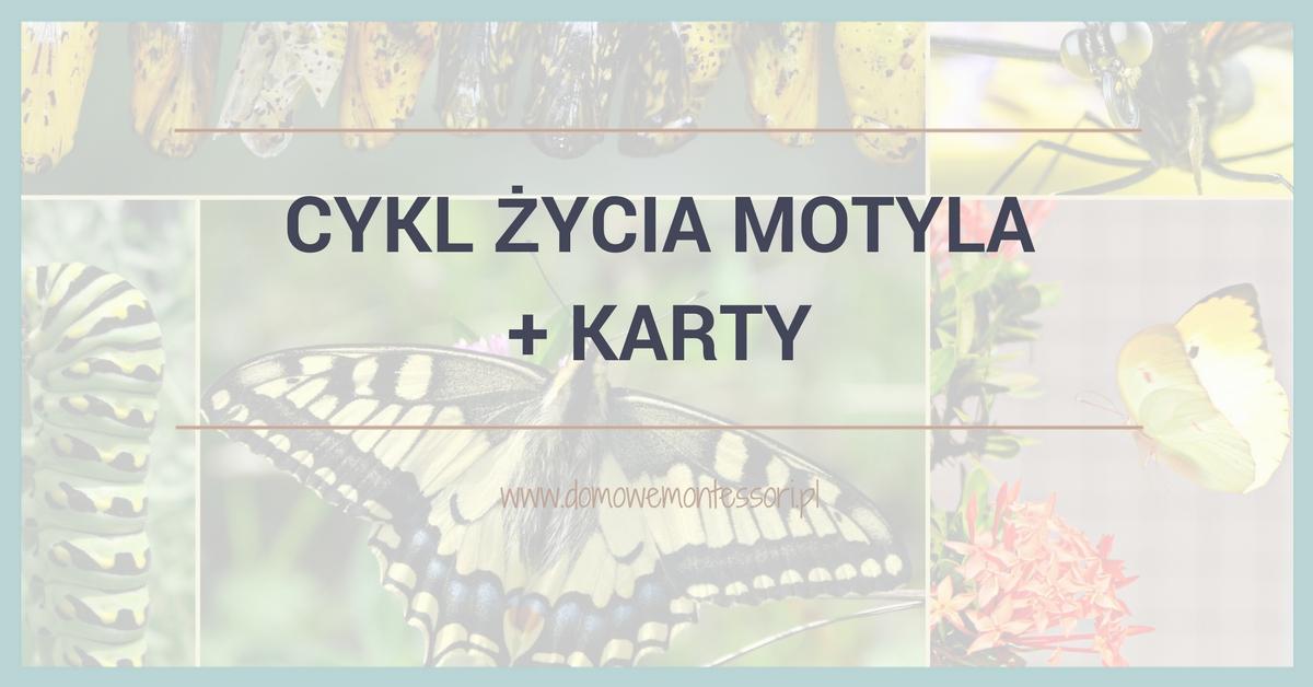 Cykl życia motyla + karty dodruku