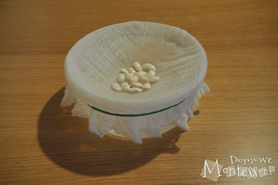 Dzień 1 - namoczenie nasion