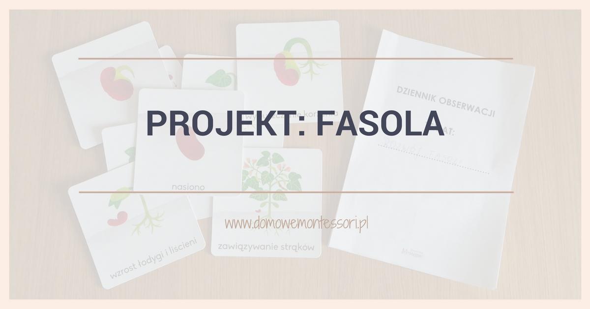 Fasola – obserwacja rozwoju rośliny